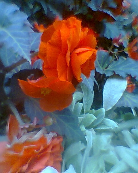 The intensity of flowers
