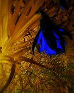 Blue flower in a dream 2