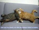 funny_cat_pictures_229