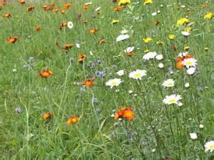tWeeds or flowers