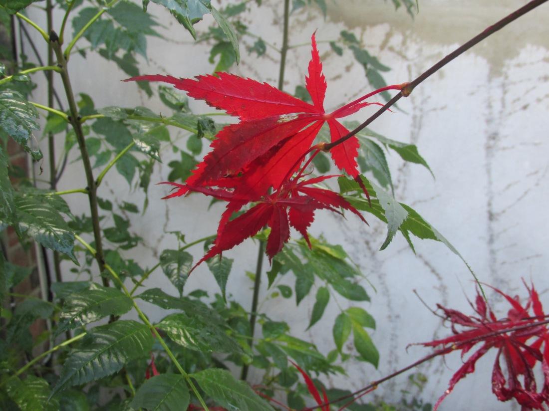 Autumn 2013 008