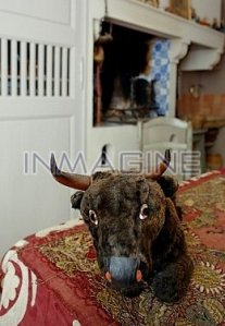 A plunesh bull in a kitch