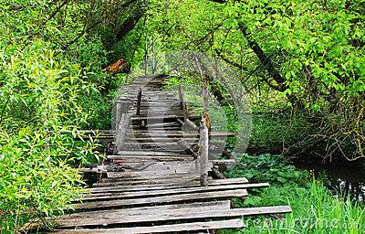 dangerous-wooden-bridge-if-broken-foot-31740048