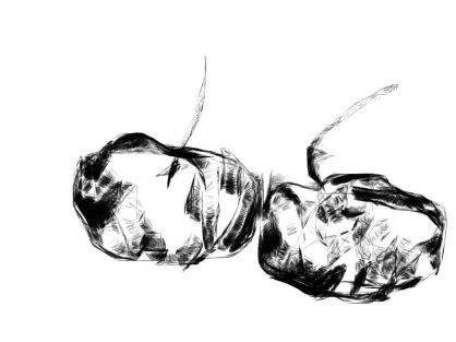 Two apples charcoal