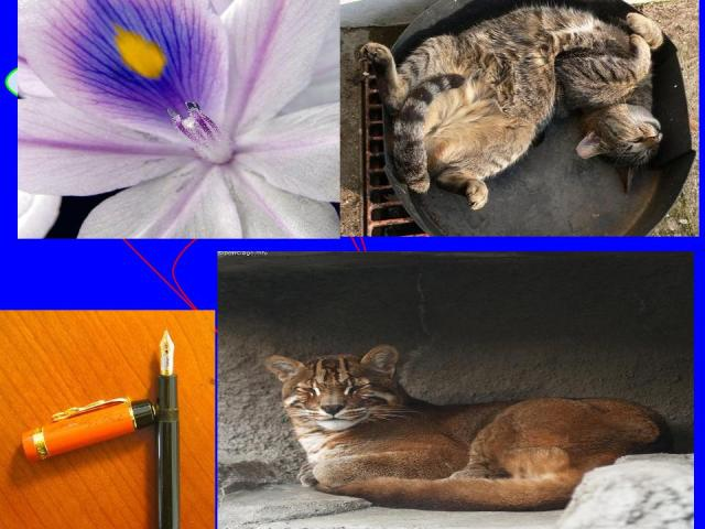 Cat pen and flower collage2