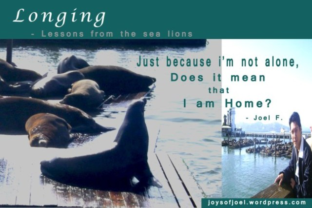 Longing, lessons from the sea lions, joys of joel poem, poem about home and longing