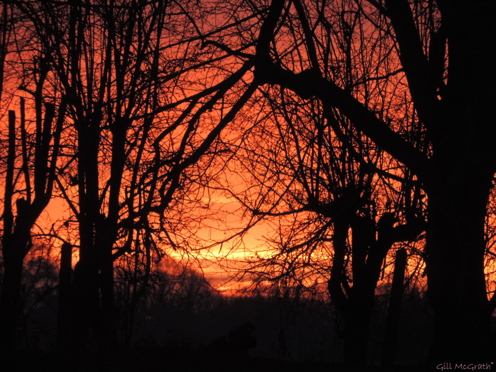 2015 11 28 morning view 1 jpg sig