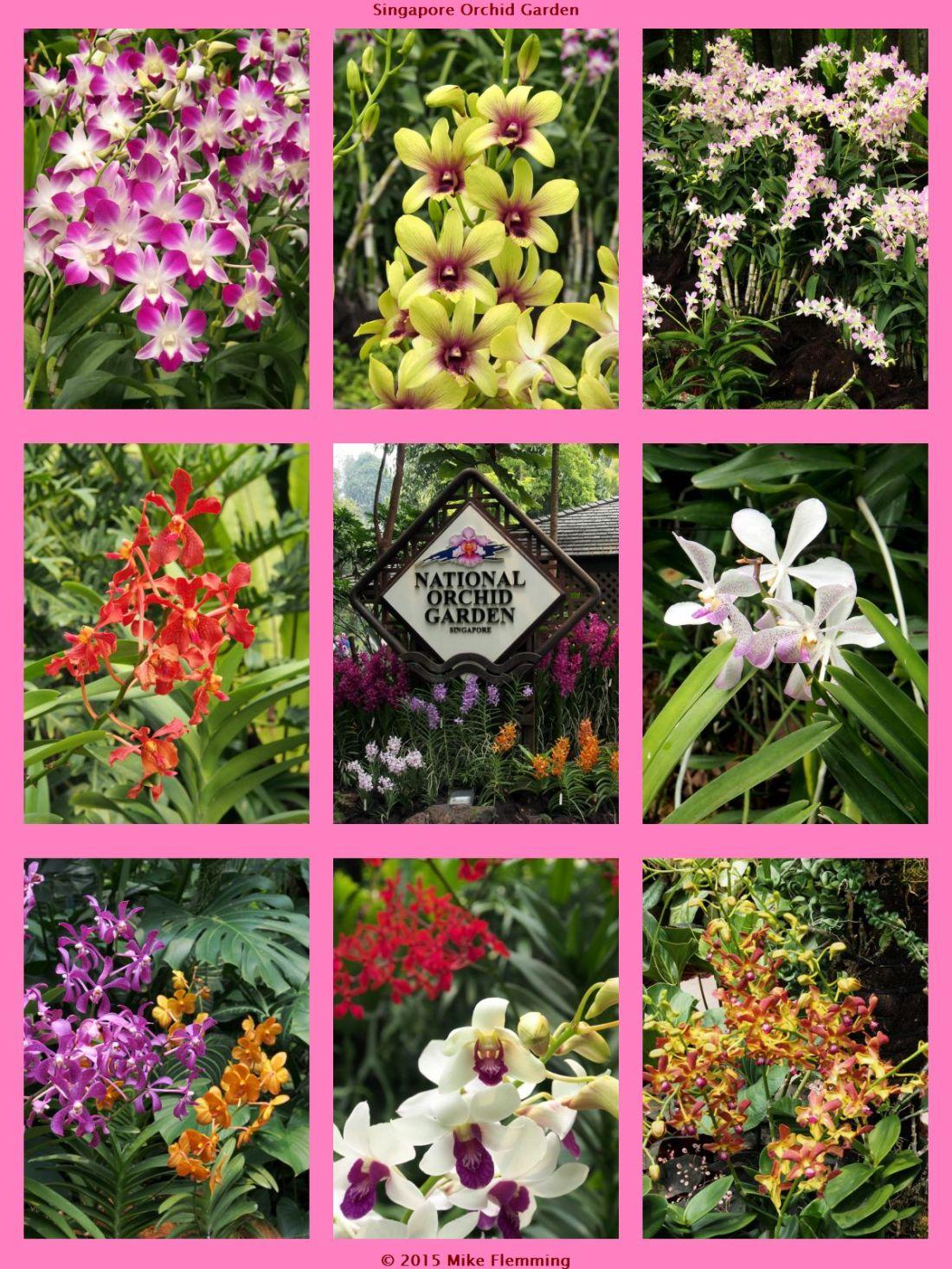 OrchidGarden1.jpg