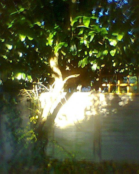 apple-tree-and-sunshine