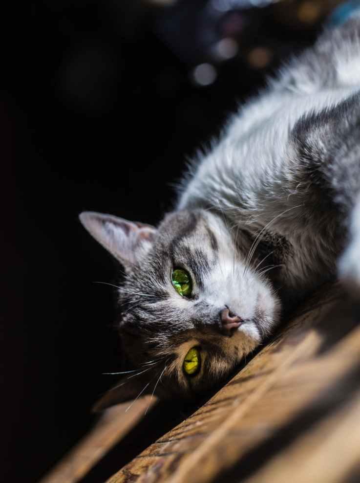 Photo by Andre David Manjon Escobar on Pexels.com