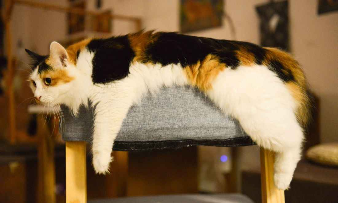 white brown and black med coated cat laying on gray ottoman