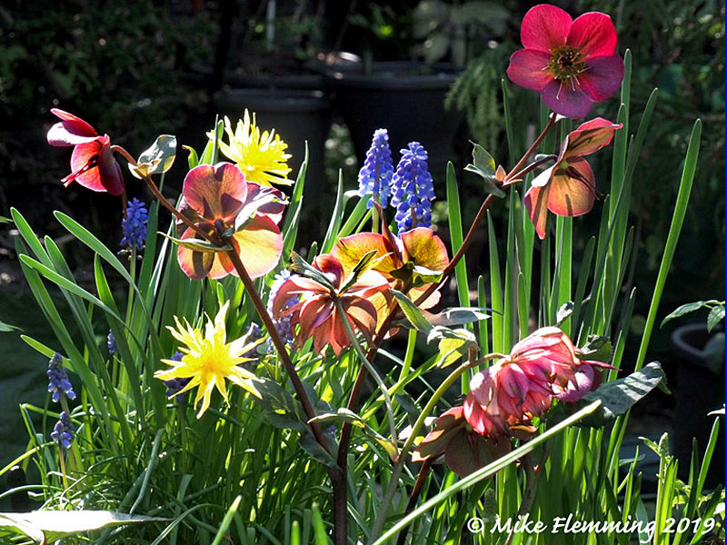 springflowers2019